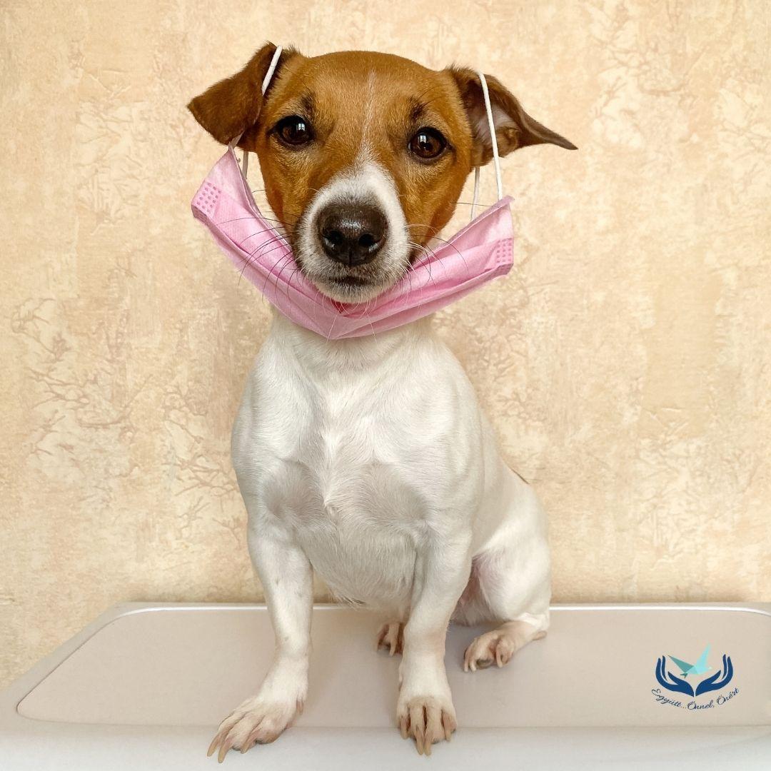 Karantén kutyák  – avagy miért négylábú barátainkkal a legjobb bekuckózni?