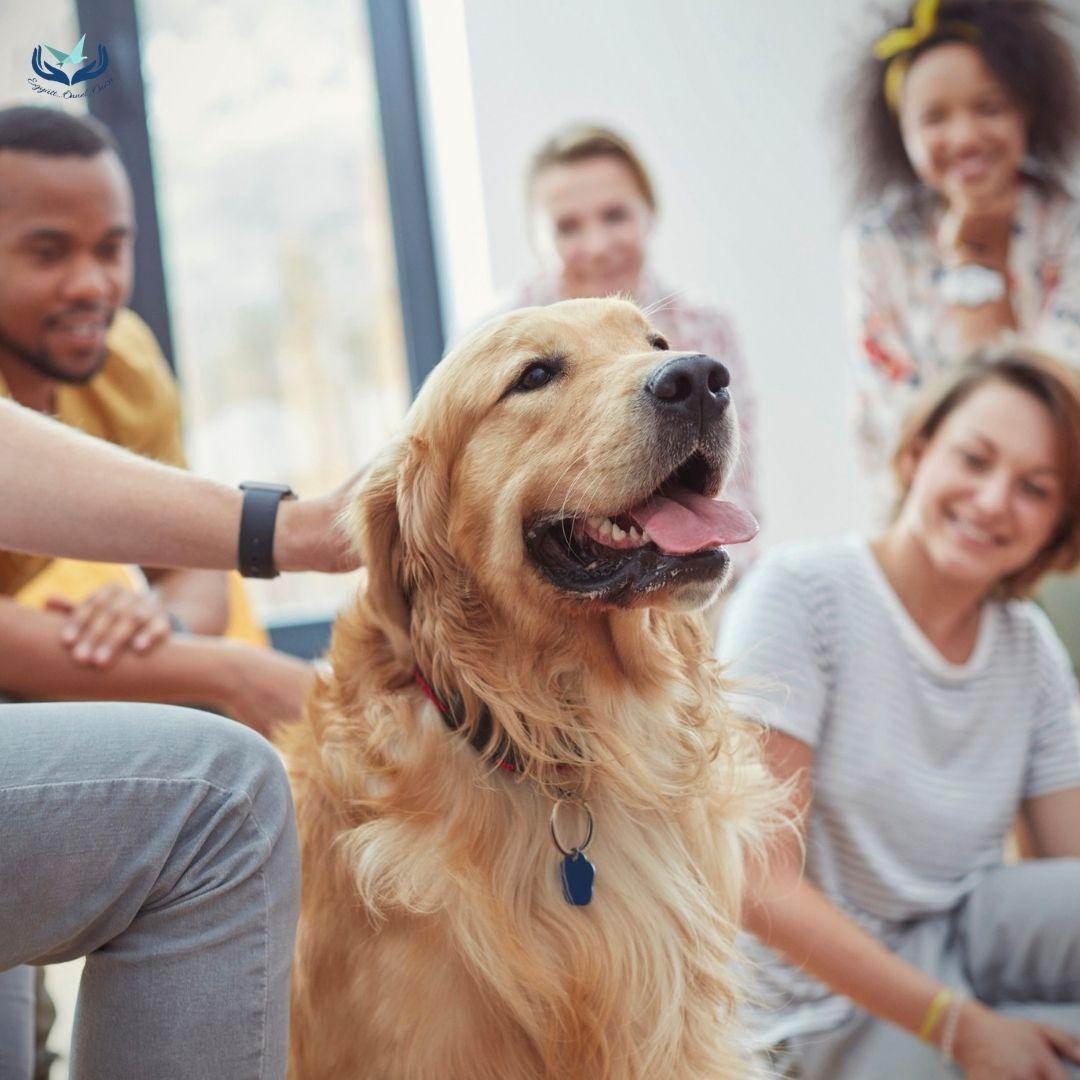 Állatok a terápiás térben