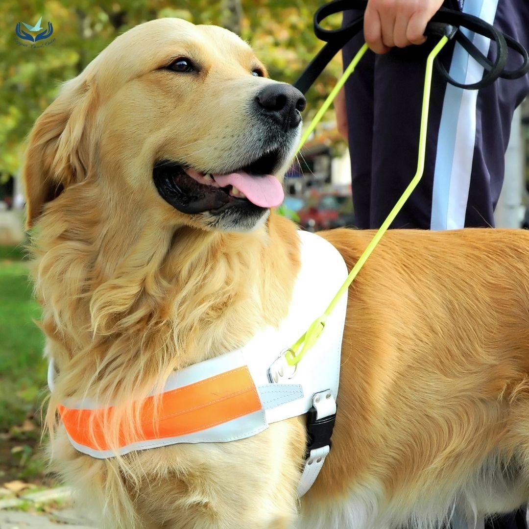 segítő-kutyák-online-pszichologus